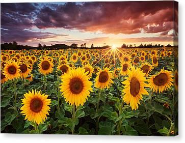 Sunset.sky Canvas Print - Sunshine by Michael Breitung