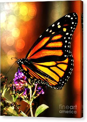 Sunshine Monarch  Canvas Print