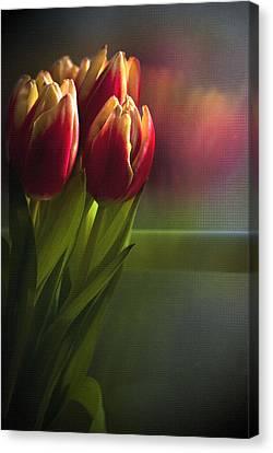 Sunshine On My Window Canvas Print by Cindy Rubin