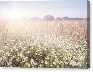 Sunshine Over The Fields Canvas Print by Natalie Kinnear