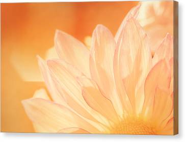 Depth Of Field Canvas Print - Sunshine by Scott Norris