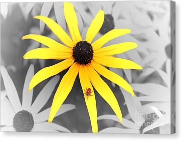 Sunshine Susie Canvas Print