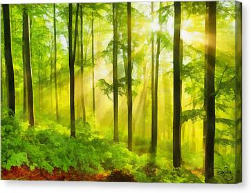 Sun Rays Canvas Print - Sunshine Through The Trees by Marion Daly