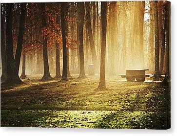 Sunshine Through The Woods Canvas Print by Diana Boyd