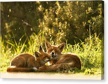 Kit Fox Canvas Print - Sunshower by Roeselien Raimond