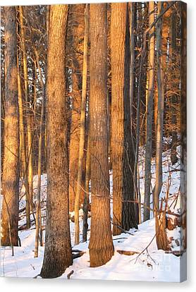 Sunwarmed In Winter Canvas Print by Melissa Stoudt