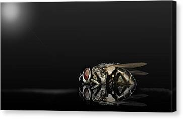 Super Flies 01 Canvas Print by Kevin Chippindall