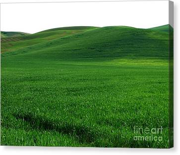 Super Greens Land Canvas Print by Boon Mee