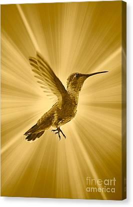 Mighty Hummingbird Canvas Print by Carol Groenen