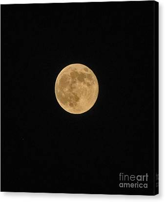 Super Moon 8 10 14 Canvas Print by Jay Milo