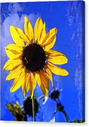 Canvas Print - Super Sunflower by Marty Koch
