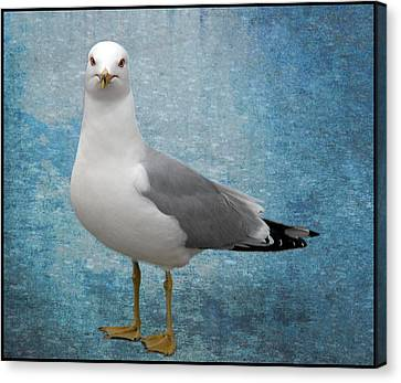Superior Seagull Canvas Print by Terri Harper