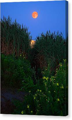 Supermoon 2014 -color Canvas Print