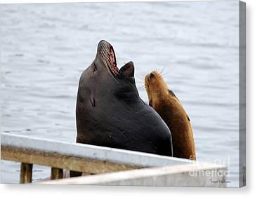 Supersized Sea Lion And Friend Canvas Print