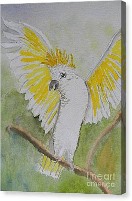Suphar Crested Cockatoo Canvas Print by Pamela  Meredith