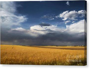 Sure Wish It Would Canvas Print by Jon Burch Photography