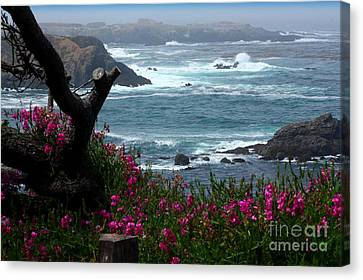 Surf And Turf Canvas Print by Patrick Witz