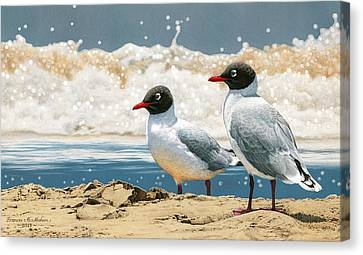 Surf 'n' Turf - Franklin's Gulls Canvas Print by Frances McMahon