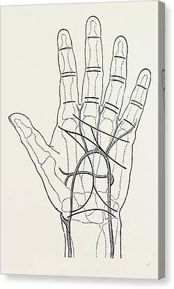 Lines Of The Hands Canvas Print - Surface Markings On The Palm Of Ffile Hand by Litz Collection