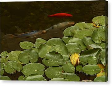 Surface Tension Canvas Print by Michael Gordon