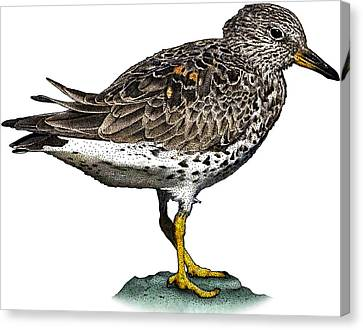 Surfbird Canvas Print