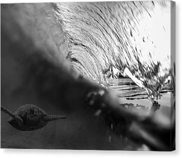 Surfing Honu Canvas Print