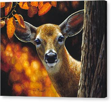 Whitetail Deer - Surprise Canvas Print by Crista Forest