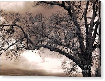 Surreal Fantasy Gothic South Carolina Oak Trees Canvas Print by Kathy Fornal