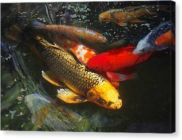 Canvas Print featuring the photograph Surreal Fishpond by Adria Trail