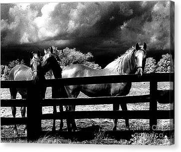 Surreal Horses Stormy Black And White Infrared Horse Landscape Canvas Print by Kathy Fornal