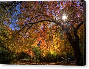 Surrounded By Autumn's Color Canvas Print