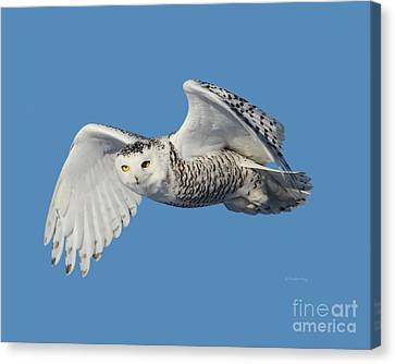 Surveying Her Territory Canvas Print by Heather King