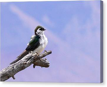 Surveying My Domain Canvas Print by Laurel Powell
