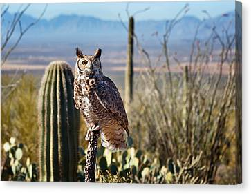 Kathleen Canvas Print - Surveying The Sonoran by Kathleen Bishop