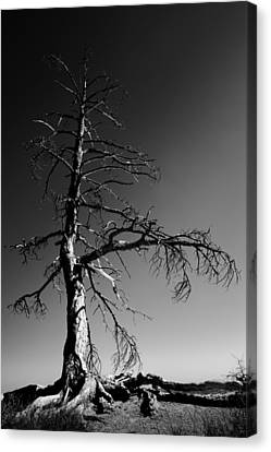 Survival Tree Canvas Print by Chad Dutson