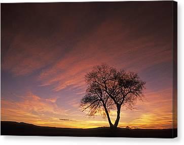 Contour Farming Canvas Print - Susie's Tree by Latah Trail Foundation