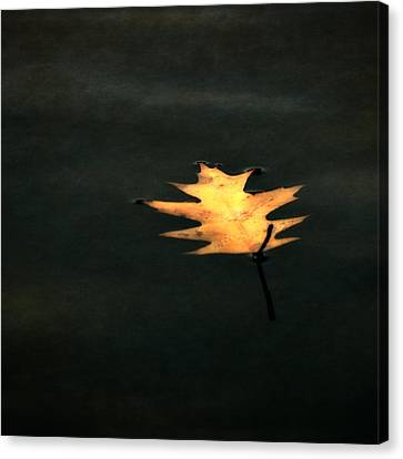 Autumn Leaf On Water Canvas Print - Suspended by Michelle Calkins
