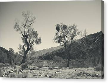 Suvival Can Be Tough Canvas Print by Laurie Search