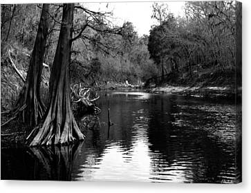 Suwannee River Black And White Canvas Print by Donald Williams