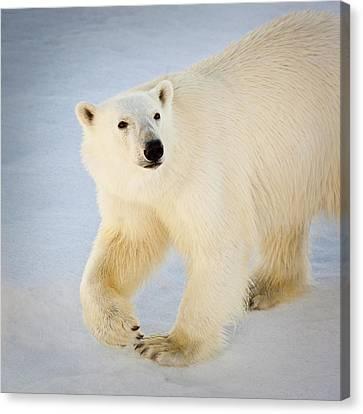 Svalbard, Norway Canvas Print by Janet Muir