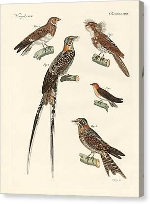 Swallow-like Birds Canvas Print by Splendid Art Prints