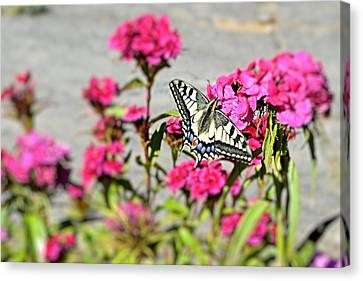 Swallow Tail Canvas Print by Dave Woodbridge