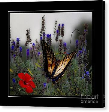 Swallowtail Among Blue Flowers Canvas Print by John  Kolenberg