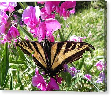 Canvas Print featuring the photograph Swallowtail by Cheryl Hoyle