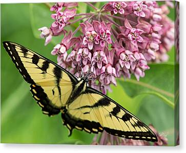 Tiger Swallowtail Canvas Print - Swallowtail Notecard by Everet Regal