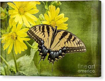 Canvas Print featuring the photograph Swallowtail by Vicki DeVico