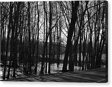 Swamp Canvas Print by Amy Lingle