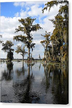 Swamp Canvas Print by Beth Vincent