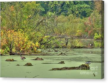 Swamp Birds Canvas Print