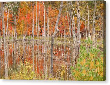 Swamp Colors Canvas Print by Mary Carol Story